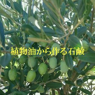 豊富な植物油のイメージ